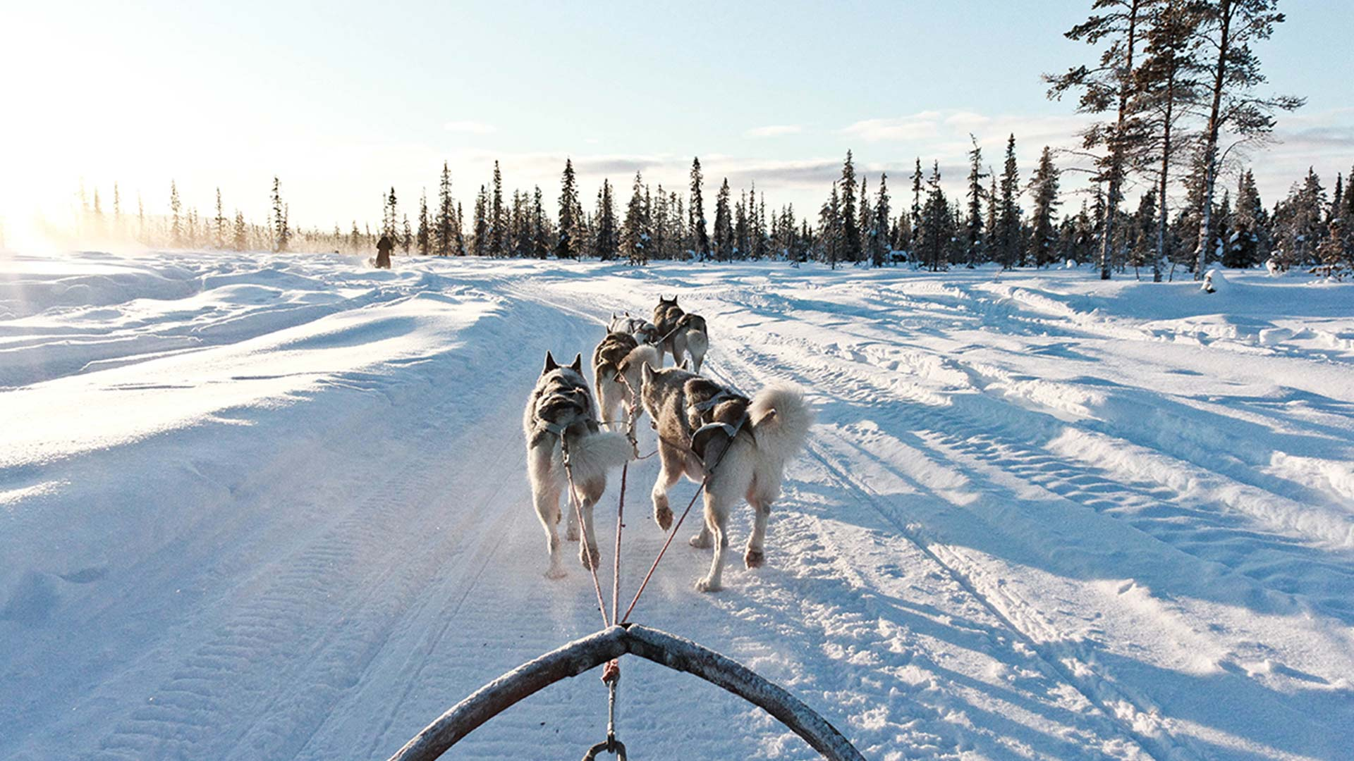 Lapland by Dog Sled - 3 Days 2 Nights - Nordic Visitor