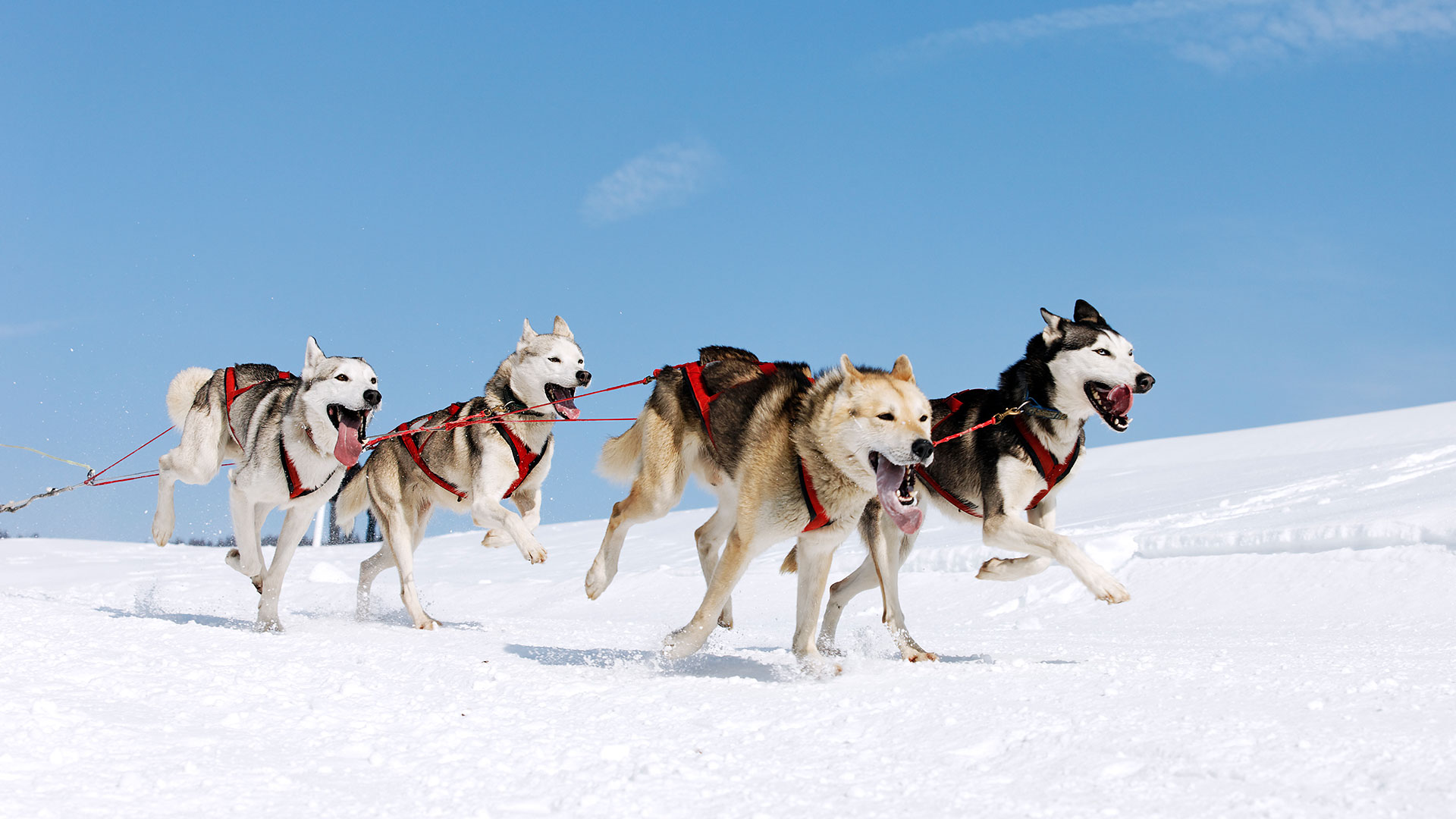Husky Tour in the Wilderness of Lapland - 4 Days 3 Nights ...