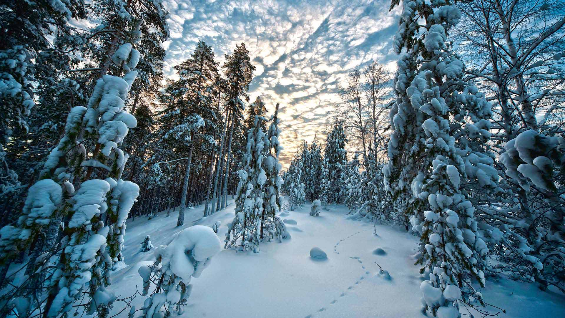 Day Trips Levi Finland Lapland Activities Amp Tours