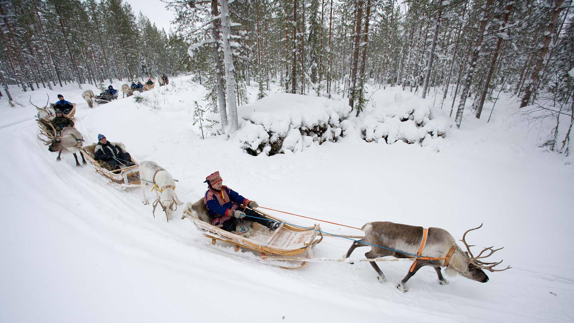 Reindeer & Sami Culture : Tours & Travel Packages in Lapland ...